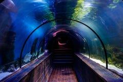 Un tunnel sous l'aquarium avec des poissons photo libre de droits