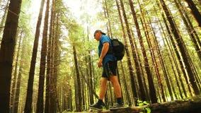 Un turista con una mochila está cruzando un barranco sobre un árbol caido almacen de video