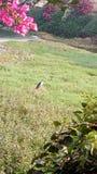 Un uccello immagine stock