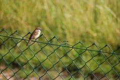 Un uccello Fotografia Stock