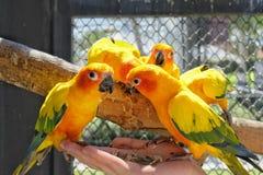 Un uccello Fotografia Stock Libera da Diritti