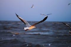 Un uccello Fotografie Stock Libere da Diritti
