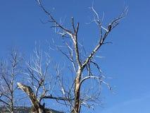Un uccello appollaiato in un albero Immagini Stock Libere da Diritti