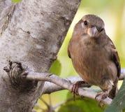 Un uccello che mi esamina su un arto di albero immagini stock