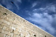 Uccello sopra la parete lamentantesi Immagine Stock