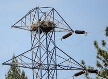 Un uccello che si siede su un nido immagini stock