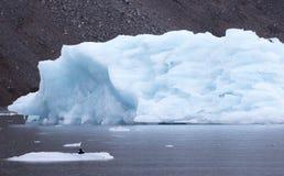 Un uccello che si siede su un piccolo iceberg con un iceberg di dimensione media nel fondo Fotografia Stock Libera da Diritti