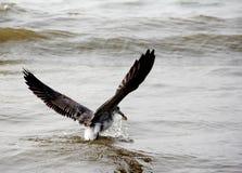 Un uccello di mare Fotografia Stock Libera da Diritti