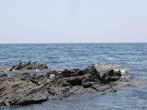 Un uccello di mare nuota vicino alle rocce Fotografia Stock Libera da Diritti
