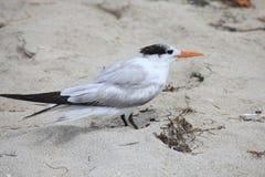 Un uccello di mare sta stando fotografia stock libera da diritti