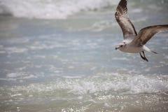 Un uccello di mare sta volando fotografie stock