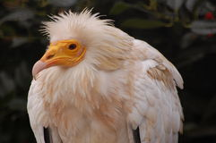 Un uccello divertente Fotografia Stock
