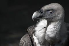 Un uccello elegante Immagini Stock Libere da Diritti
