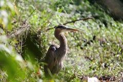 un uccello nel cespuglio Fotografie Stock Libere da Diritti