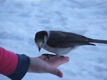 Un uccello nella mano Fotografia Stock Libera da Diritti