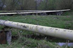 Un uccello si siede sul tubo di gas vicino al fiume immagine stock