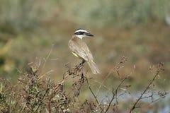 Un uccello sul ramo Fotografie Stock Libere da Diritti