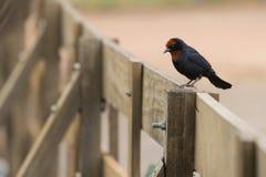 Un uccello sul recinto Fotografia Stock