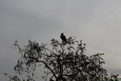 Un uccello sull'albero fotografie stock libere da diritti
