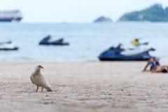 Un uccello sulla sabbia con il mare Fotografia Stock