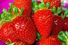 Un un montón de Buch de fresas Imagen de archivo libre de regalías