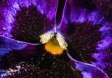 Un universo en una flor Foto de archivo libre de regalías