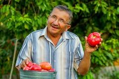 Un uomo anziano con i pomodori Fotografia Stock