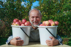 Un uomo anziano nel giardino con i secchi delle mele Immagine Stock