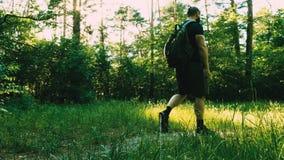 Un uomo barbuto con uno zaino nella buona forma fisica sta camminando con la ricreazione della foresta Addestramento Tien Shan sa archivi video
