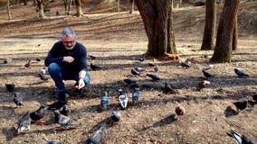 Un uomo barbuto dai capelli grigi alimenta una moltitudine di piccioni nel parco in primavera archivi video