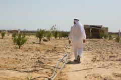 Un uomo beduino nella sua azienda agricola nel deserto di Sinai, Egitto Immagine Stock Libera da Diritti