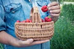 Un uomo in camicia blu del denim che tiene un canestro di vimini con le fragole rosse mature Fotografie Stock Libere da Diritti
