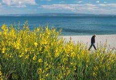 Un uomo che cammina sulla spiaggia nella spaccatura Croazia Fotografie Stock Libere da Diritti