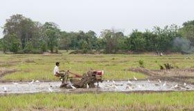 Un uomo che lavora in un giacimento del riso, Sri Lanka Fotografie Stock Libere da Diritti