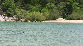 Un uomo che si immerge vicino al litorale del ` s della spiaggia video d archivio