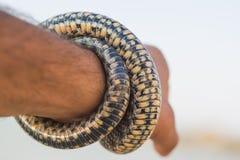Un uomo che tiene un serpente sulla spiaggia Fotografia Stock