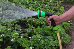 Un uomo con un tubo flessibile di giardino fotografia stock