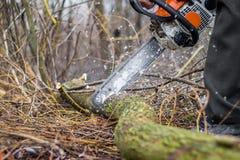 Un uomo con una motosega che sega un ceppo, rimuovente una foresta, harvestin fotografie stock