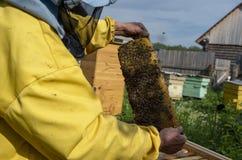 Un uomo estrae del telaio dell'alveare con miele e le api immagine stock libera da diritti