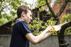 Un uomo ha tagliato un albero asciutto immagine stock