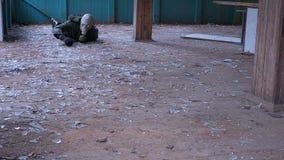 Un uomo nei movimenti striscianti e nei dadi di una maschera antigas stock footage
