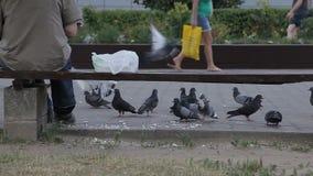 Un uomo sta alimentando i piccioni sulla via video d archivio