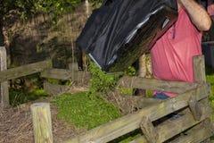 Un uomo svuota il sacco di erba che ha tagliato con la falciatrice da giardino fotografie stock libere da diritti
