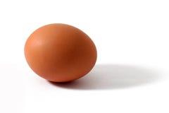 Un uovo Fotografie Stock