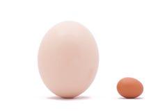 Un uovo del pollo e dello struzzo Fotografie Stock