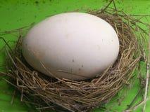 Un uovo di nido reale Fotografia Stock