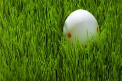 Un uovo di Pasqua su erba Immagini Stock
