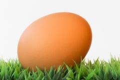 Un uovo su erba su un fondo bianco Fotografia Stock