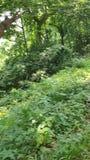 Un vídeo corto de una aventura de la selva almacen de metraje de vídeo