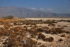 Un valle del desierto en México Foto de archivo